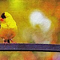 Goldfinch Sitting Pretty by Diane Lindon Coy
