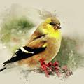 Goldfinch Watercolor Art by Christina Rollo
