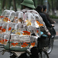 Goldfish In A Bag Vietnam On Bicycle Unique  by Chuck Kuhn