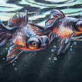 Goldfish by Lachri