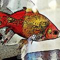 Goldfish by Sarah Loft