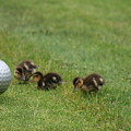 Golf Anyone by James Williams