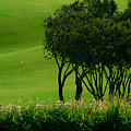 Golf Course Abstract by Colin Radford