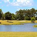 Golf Course Beauty  by Cynthia Guinn