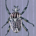 Goliath Beetle by Mindy Lighthipe