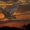 Goliath Heron At Sunset by Larry Linton