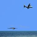 Herky Bird And Osprey by R B Harper