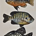 Gone Fishing by Kiley Nyenhuis
