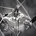 Gone To Seed Berries And Vines by Teresa Mucha