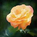 Good As Gold Painted Rose by Anita Pollak