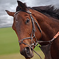 Good Morning - Racehorse On The Gallops by Gill Billington