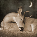 Goodnight Deer by Sally Banfill