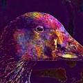Goose Bird Animal Nature Outdoor  by PixBreak Art