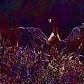 Goose Bird Wildlife Nature Fly  by PixBreak Art