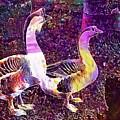 Goose Birds Waterfowl Nature  by PixBreak Art