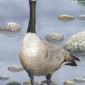 Goose by Catherine G McElroy