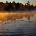 Goose In The Mist On Old Forge Pond by David Patterson