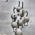 Goose Parade by Diana Rajala