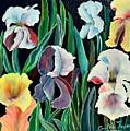 Gorgeos Iris by Cvetko Ivanov
