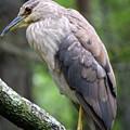 Gorgeous Bird by William Tasker