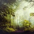 Gorgeous Woods by Dirk Wuestenhagen