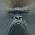 Gorilla Freehand Abstract by Ernie Echols