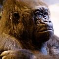 Gorilla Headshot by Sonja Anderson