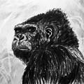 Gorilla by John Cox