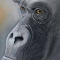 Gorilla Love by Louise Andersen