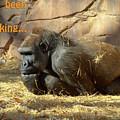 Gorilla Musings by Betty LaRue