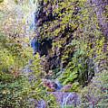 Gorman Falls At Colorado State Park IIi - San Saba Texas Hill Country by Silvio Ligutti