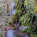 Gorman Falls At Colorado State Park - San Saba Texas Hill Country by Silvio Ligutti