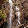 Gorman Falls by Elizabeth Clements