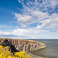 Gorse At Cullernose Point by David Head