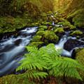 Gorton Creek Fern by Darren White