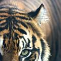 Got My Eye On You by David Dunham