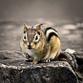 Got Nuts by Evelina Kremsdorf