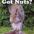 Got Nuts? by Raymond J Deuso