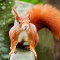 Got Nuts? by Susie Peek