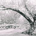 Gothic Bridge 28 by Jessica Jenney