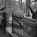 Surreal Gothic Gargoyle With Raven Black And White Gothic Gargoyles Gate Scene by Kathy Fornal