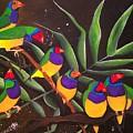Gouldian Finch Rainbow by Una  Miller