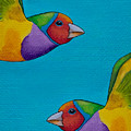 Gouldian Finches by Robert Lacy