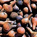 Gourds Galore by Josephine Buschman