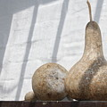 Gourds In Shadow by Lauri Novak