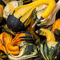 Gourds Of Color by David Millenheft
