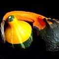 Gourds by Veron Miller