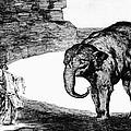 Goya: Elephant, C1820 by Granger
