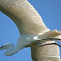 Graceful Flight by Kenneth Albin