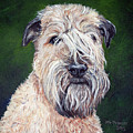 Gracie, Soft Coated Wheaten Terrier by Monika Brauer